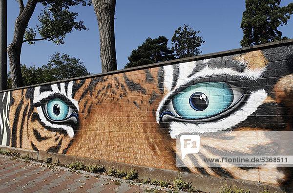 Tiger-Augen mit drohendem Blick  Graffito an der Mauer des Kölner Zoos  Köln  Nordrhein-Westfalen  Deutschland  Europa