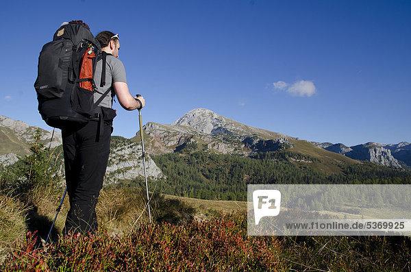 Wanderer mit Rucksack und Trekkingstöcken vor Bergkulisse unterwegs zur Gotzenalm  Schönau am Königssee  Berchtesgadener Land  Bayern  Deutschland  Europa