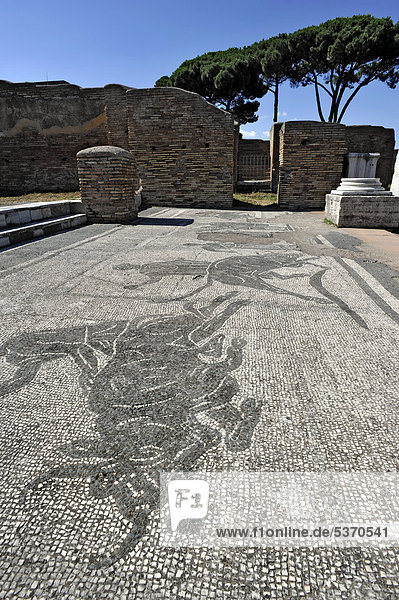Mosaiken in den Ruinen der Polizeikaserne Caserma dei Vigili im Ausgrabungsgelände Ostia Antica  antike Hafenstadt von Rom  Latium  Italien  Europa