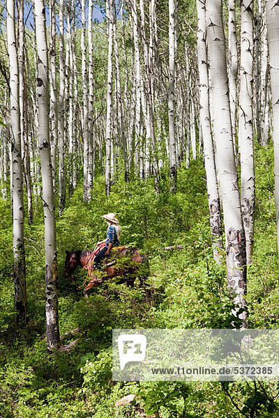 Frau auf Pferd durch Wald  Colorado  USA