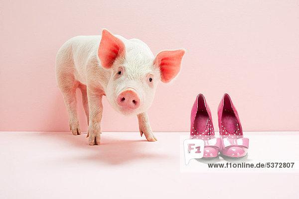 Ferkel neben den Schuhen im rosa Studio