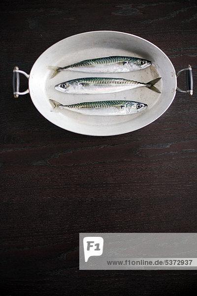 Drei nachhaltige Fische in einer Schale