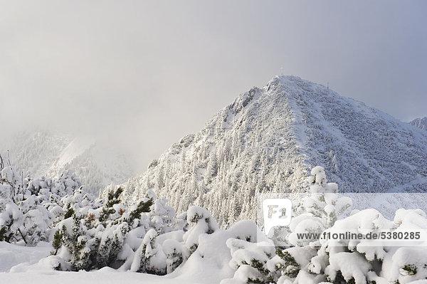 Deutschland  Bayern  Blick auf den schneebedeckten Herzogstand Bergwald
