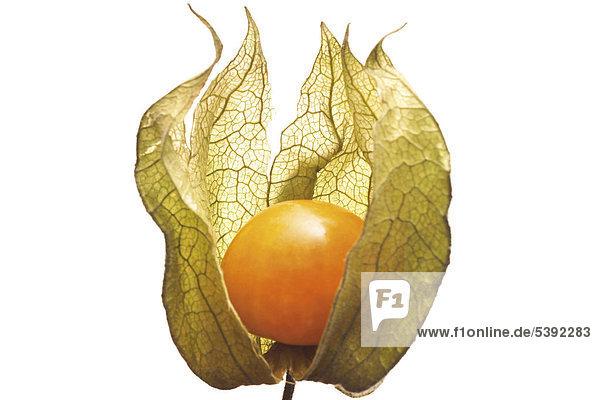 Physalis oder Kapstachelbeere (Physalis peruviana) Physalis oder Kapstachelbeere (Physalis peruviana)