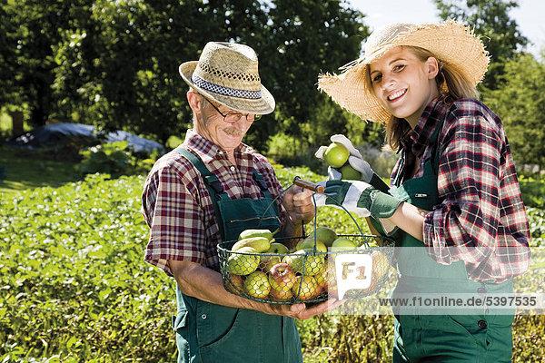 Apfelernte  Gärtner und Gärtnerin