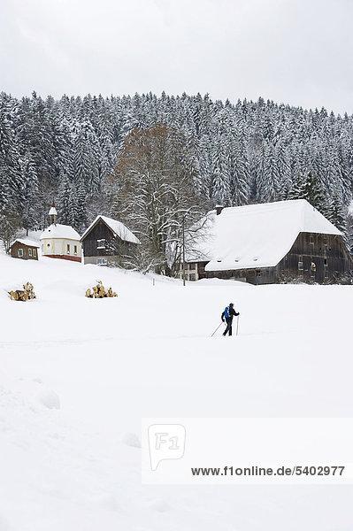 Langläufer bei Hinterzarten  Schwarzwald  Baden-Württemberg  Deutschland  Europa