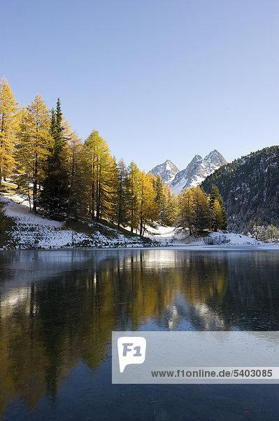 Palpuognasee  Lai da Palpuogna  mit herbstlich verfärbten Lärchen  Schnee  Bergün  Albulapass  Kanton Graubünden  Schweiz  Europa Kanton Graubünden