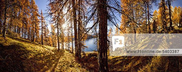 blauer Himmel wolkenloser Himmel wolkenlos Panorama Landschaftlich schön landschaftlich reizvoll Wasser Europa Berg Baum Himmel Spiegelung Wald See Holz Alpen Herbst Kanton Graubünden Lärche Engadin Schnee Sonne Schweiz