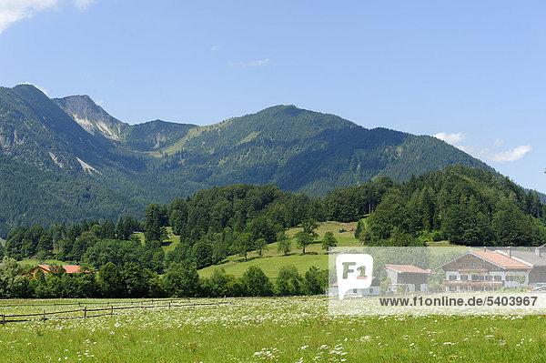 Bauernhof in Osterhofen  bei Bayerischzell  mit den Bergen des Spitzinggebiets  Oberbayern  Bayern  Deutschland  Europa