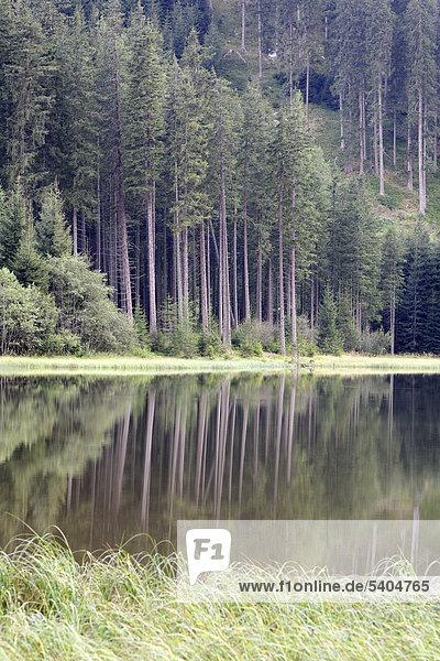 Coniferous forest is reflected in Ingeringsee Lake  Mt Hochreichhart  Seckauer Tauern range  Upper Styria  Styria  Austria  Europe