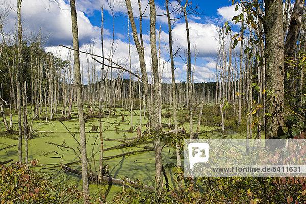 Marsh region in Orange County in upstate New York  USA