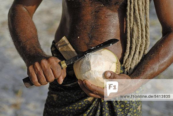 Mann öffnet Kokosnuss  Insel Bangaram  Lakkadiven  Lakshadweep  Arabisches Meer  Südindien  Indien  Asien