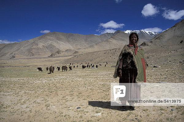 Frau hütet Ziegen  am Tazang Tso  Ladakh  indischer Himalaya  Jammu und Kaschmir  Nordindien  Indien  Asien