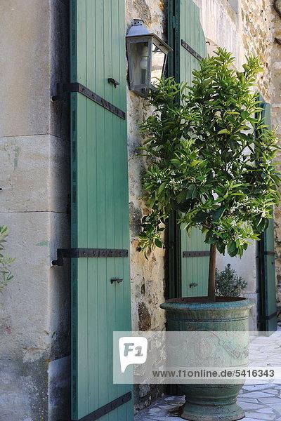 Blume Wohnhaus Baum Blume,Wohnhaus,Baum