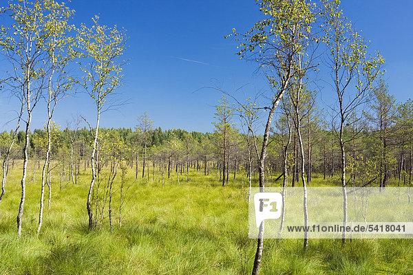 Staatliches Naturreservat Cepkeliu  Litauen  Europa