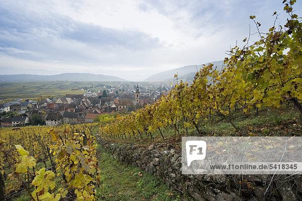 Riquewihr  nördlich von Colmar  Elsass  Frankreich  Europa