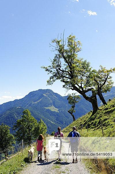 Mt Feilkopf  near Pertisau on Achensee Lake  Karwendel range  Tyrol  Austria  Europe