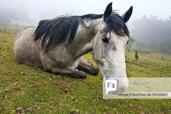 Guatemala  Chicasanga  finca  horse
