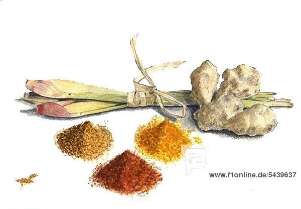Zitonengras  Ingwer Currys