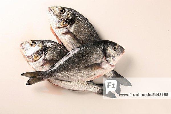 3 Fische - Dorade   Goldbrasse 3 Fische - Dorade , Goldbrasse