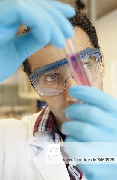 Prüfung  Wissenschaftler  flüssig  Untersuchung