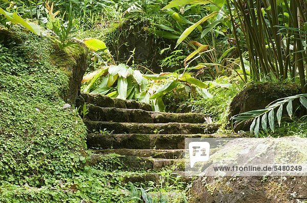 USA  Hawaii  Oahu Waimea Arboretum & Botanical Garden. stone stairway in the jungle.