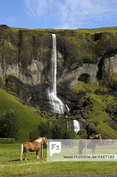 Islandpferde vor Wasserfall an der Südküste  Island  Europa