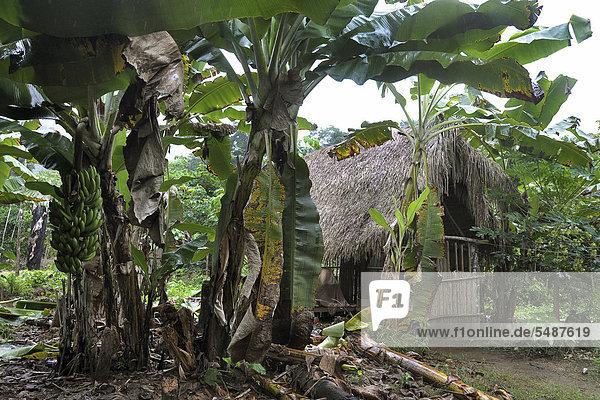 Wooden hut  Indian village  Amazonia  Brazil  South America