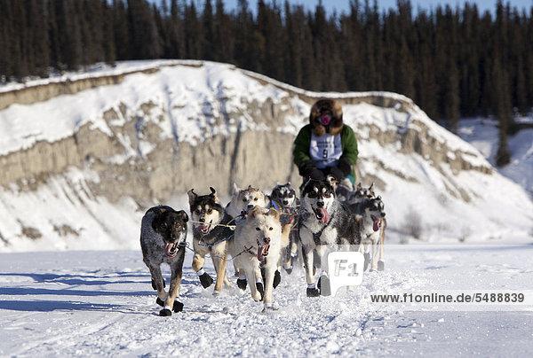 Laufendes Hundeteam auf dem Eis des zugefrorenen Takhini River  Schlittenhunde  Mushing  Alaskan Huskies am Start des Yukon Quest 2011  ein 1000-Meilen langes internationales Schlittenhundrennen  Whitehorse  Yukon Territory  Kanada