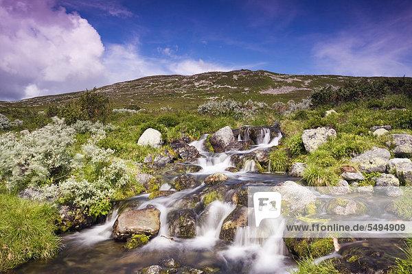 Landschaft mit Bach  Femundsmarka-Nationalpark  Provinz Hedmark  Norwegen  Skandinavien  Europa