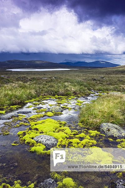 Landschaft mit dem kleinen Grovelsjön See  Femundsmarka-Nationalpark  Provinz Hedmark  Norwegen  Skandinavien  Europa