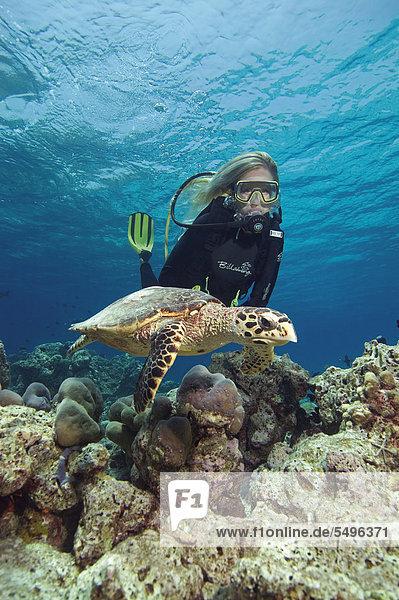 Wasserschildkröte Schildkröte Bewunderung Malediven Indischer Ozean Indik