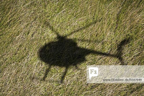 Hubschrauber Schatten über grüne Gras Feld in Maui  Hawaii.