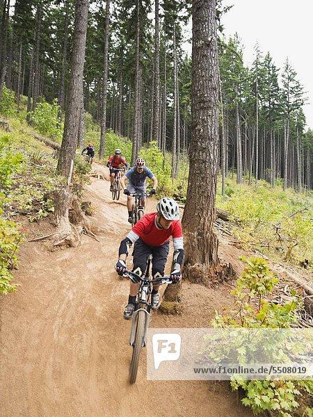 Berg folgen Wald