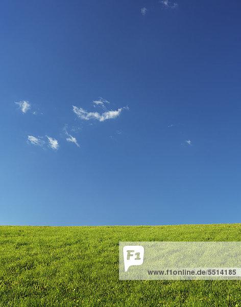 Grüne Wiesenlandschaft unter klarem blauen Himmel