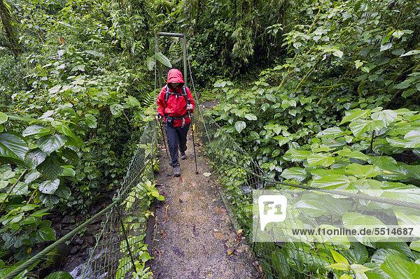 Nationalpark Wolke Wald Brücke wandern