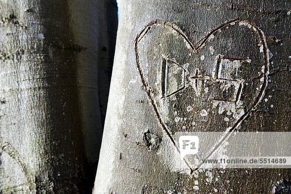 In einen Baum eingeritztes Herz und die Buchstaben D und S  Stuttgart  Baden-Württemberg  Deutschland  Europa