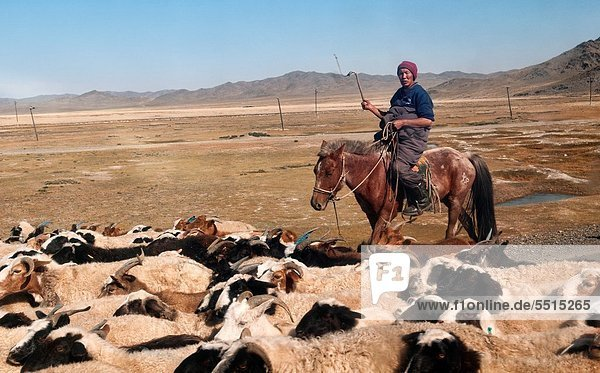 Lifestyle  Wüste  Mongolei  Ranch
