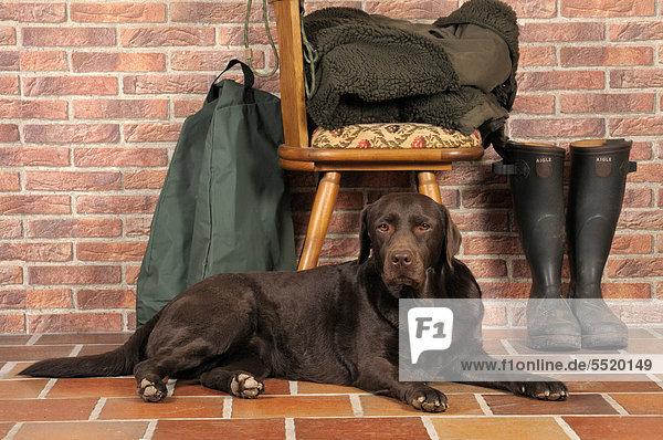 Brauner Labrador liegt vor Stuhl  daneben Gummistiefel  Jagdausrüstung
