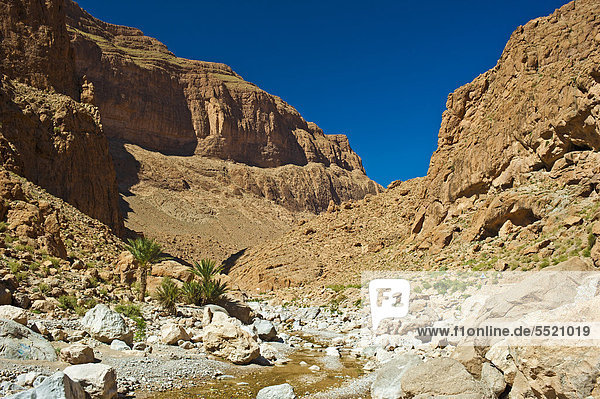 Todhra Gorge with small palm trees and an almost dried-out river bed  Tinerhir  southern Morocco  Africa
