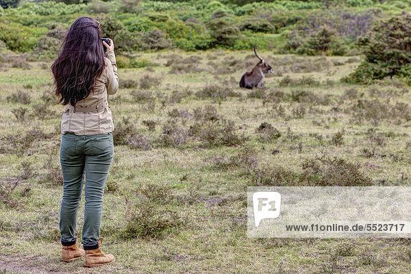 Junge Fotografin beim Fotografieren von einem Wasserbock (Kobus ellipsiprymnus)  Lake Naivasha  Kenia  Ostafrika  Afrika  ÖffentlicherGrund