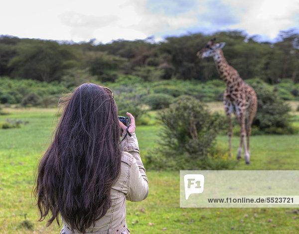 Junge Fotografin beim Fotografieren einer Massai-Giraffe (Giraffa camelopardalis tippelskirchi)  Lake Naivasha  Kenia  Ostafrika  Afrika  ÖffentlicherGrund