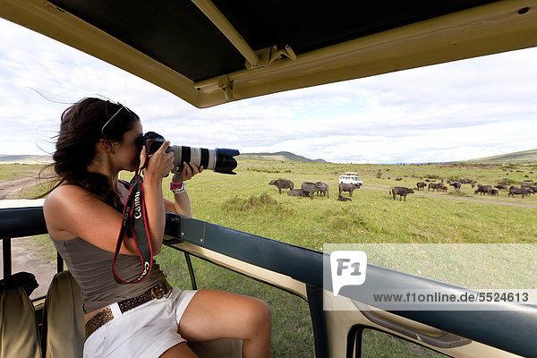 EIne junge Fotografin beobachtet eine große Herde von Afrikanischen Büffeln (Syncerus caffer)  Masai Mara Nationalpark  Kenia  Ostafrika  Afrika  ÖffentlicherGrund