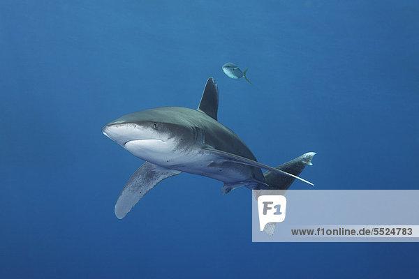 Wasser blau Pazifischer Ozean Pazifik Stiller Ozean Großer Ozean Großes Barriereriff great barrier reef schwimmen UNESCO-Welterbe Australien Cairns Queensland Hai