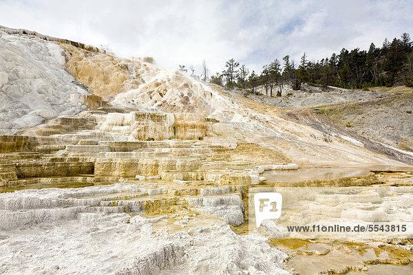 Travertine Terraces nahe den Mammoth Hot Springs  Yellowstone-Nationalpark  UNESCO Welterbe  Wyoming  USA