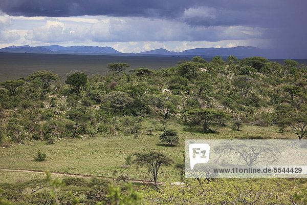 Serengetilandschaft zur Regenzeit  Serengeti Nationalpark  Tansania  Afrika