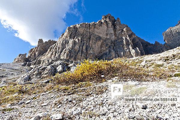 Tre Cime di Lavaredo  Drei Zinnen  Dolomiten  Italien  Europa