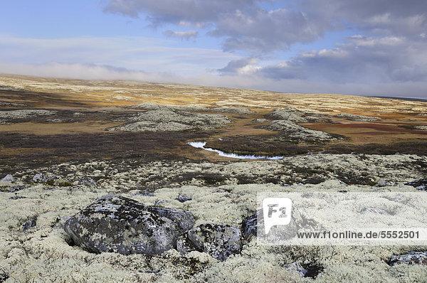 Fjelllandschaft im Herbst  Ringebufjellet. Norwegen  Europa