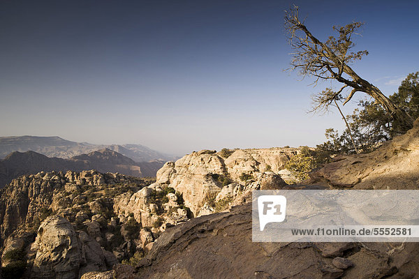 Schräg wachsender Baum  Dana Naturschutzgebiet  Jordanien  Vorderasien