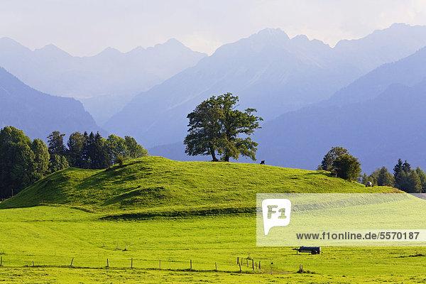 Landschaft im Allgäu  Blick nach Südosten  Oberstdorf  Allgäu  Bayern  Deutschland  Europa  ÖffentlicherGrund